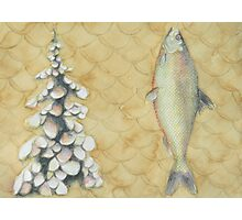 Trout, Pine, Scale Photographic Print