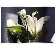 Oriental Lily #3 Poster