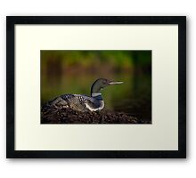 On Watch at the Nest Framed Print