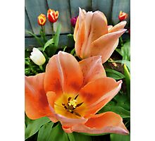 Lets all dance for the tulips are out Photographic Print