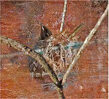 Honey eater in her nest Photographic Print