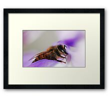 Bee On A Wisteria Flower Framed Print