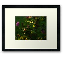 Arachne Framed Print