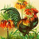 COY COCK by Tammera