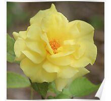 Rose Garden Beauty Poster