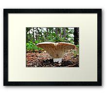 Russula Mushroom Framed Print