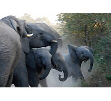 Elephant scuffle Photographic Print