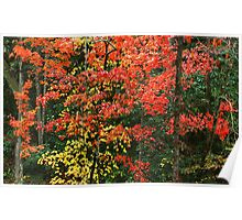 MAPLES ,AUTUMN Poster