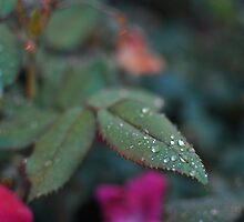 Leafy Droplets by Turlguy