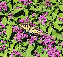 Butterfly On Pink Flowers by Cynthia48