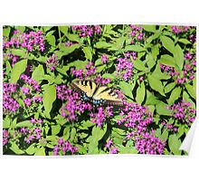 Butterfly On Pink Flowers Poster