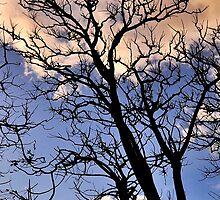 dying tree by dwikresnantaka