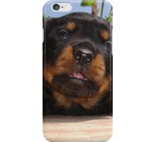 Rottweiler Puppy Giving Eye Contact iPhone Case/Skin