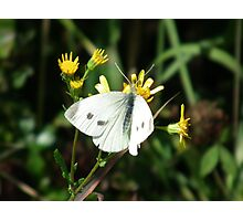Delicate Wings Photographic Print