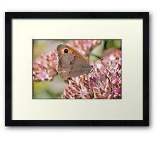 Meadow Brown Framed Print