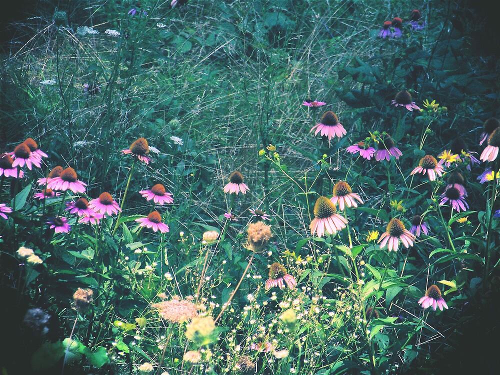 Flowers of the Field by shawntking