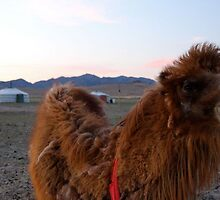 Mongolian Two Humped Camel by Citisurfer