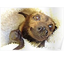 Keith - Spectacled Flying Fox Poster