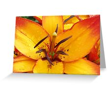 Vibrant Lily Greeting Card