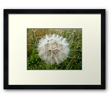 Dust Ball Framed Print