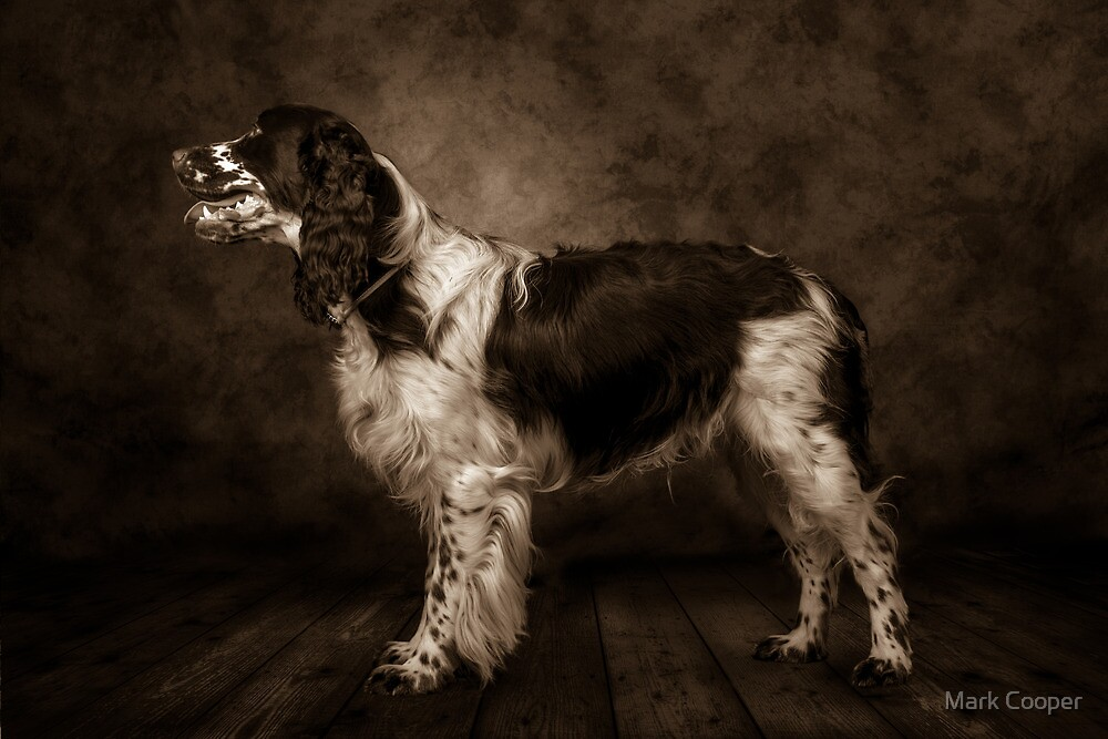 English Springer Spaniel  (Sepia) by Mark Cooper