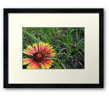Late Summer Daisy Framed Print