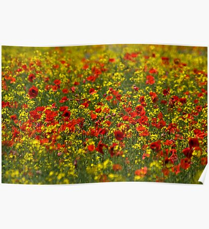 Meadow of poppies Poster