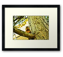 Papa Squirrel Framed Print