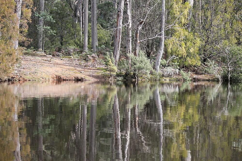 Reflections on Lake Barrington by Elaine Game