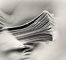 Knowledge and entertainment.... (bw) by Bob Daalder