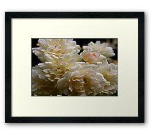 white roses and a light pink bud Framed Print