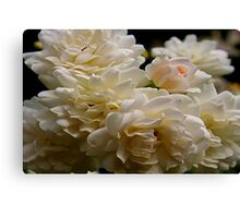 white roses and a light pink bud Canvas Print