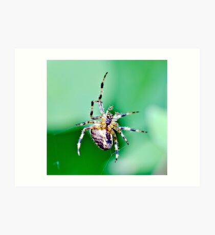 Spinning a web Art Print