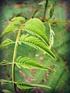 Fern by Susan S. Kline