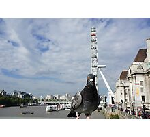 Inquisitive Pigeon at London Eye Photographic Print