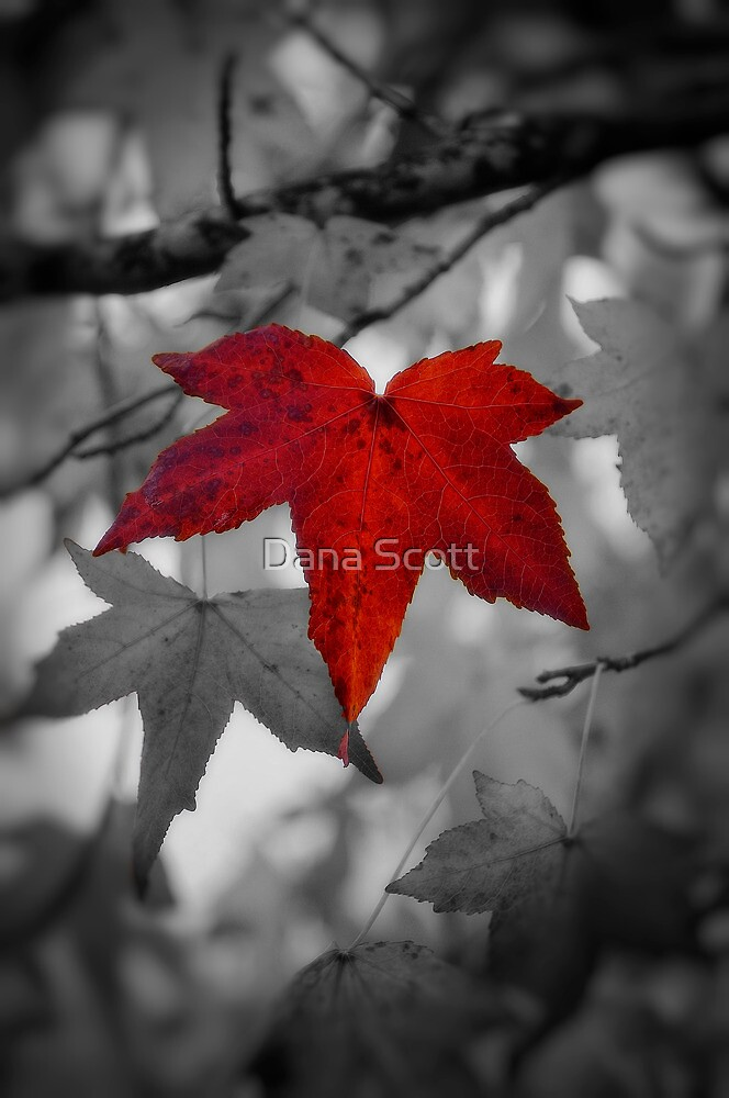 Stand Out Above The Rest by Dana Horne