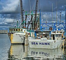 Sea Hawk Under Cover by Deborah  Benoit