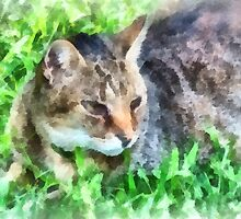 Tabby Cat Closeup by Susan Savad