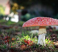 Fairies In My Garden by Bevlea Ross