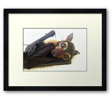 Raiden - Spectacled Flying Fox Framed Print