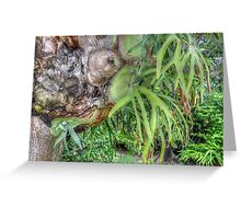 Staghorn Fern on a tree in Nassau, The Bahamas Greeting Card