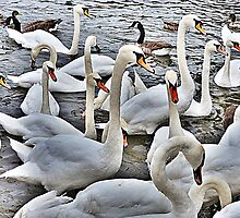 Swans at Bowness. by Lilian Marshall
