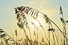 Sea Oats Sunrise 4 by Dawne Dunton