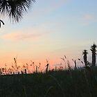 Morning Palm  by ©Dawne M. Dunton