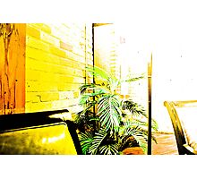Blown Out Plant Photographic Print
