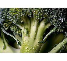 Broccolli 2 Photographic Print
