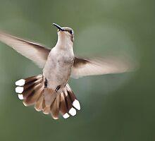 Aerodynamically Perfect by barnsis