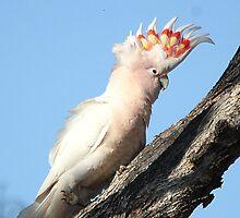 Pink Cockatoo by EnviroKey