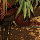 Serpent by Bob Hardy