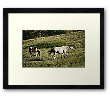 Two Outta Three Aint Bad Framed Print